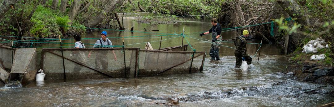 University of california santa cruz staff are working on coastal stream restoration fandeluxe Gallery